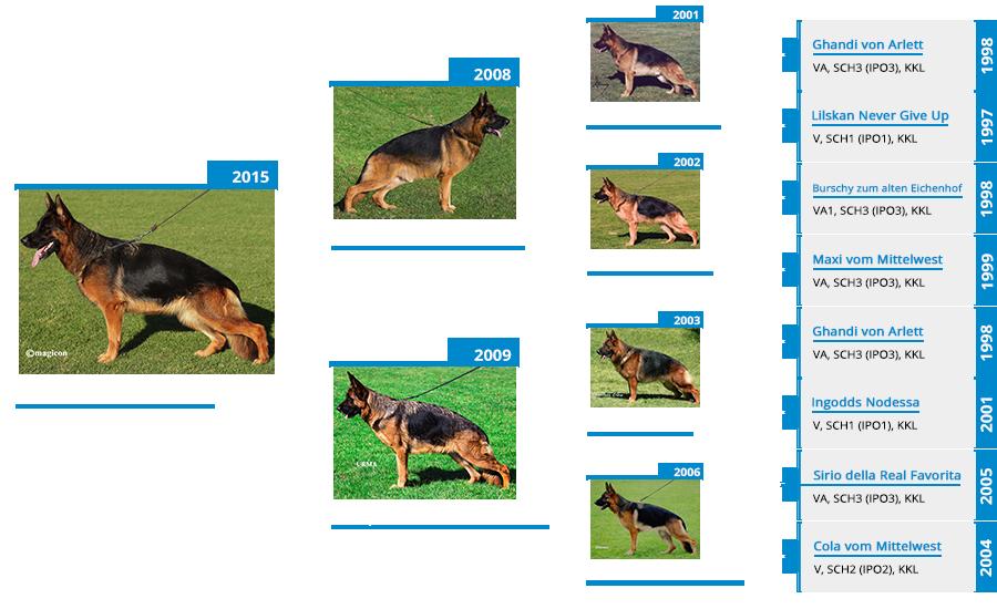 breeding-females-jolie-vom -mittelwest-pedigree