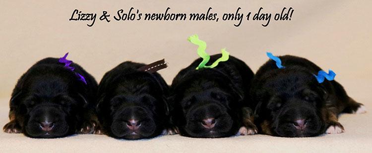 Lizy xSolo - Newborn Males