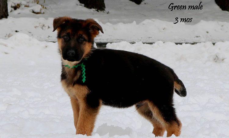 Philly x Solo - 3 Months Green Collar Male