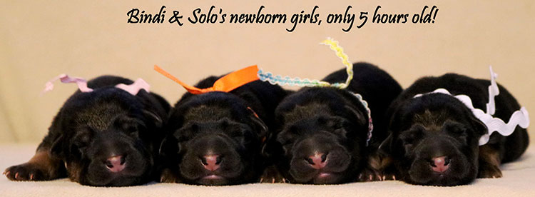 Solo x Bindi - Newborn Girls