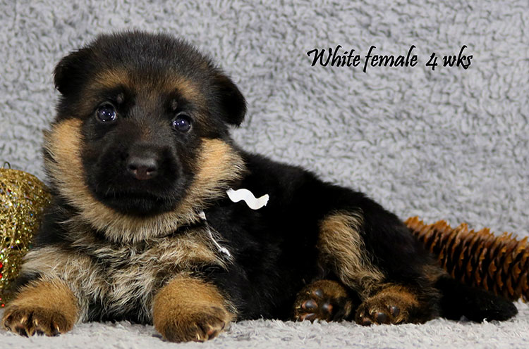 Solo x Kona - 4 Weeks White Collar Female