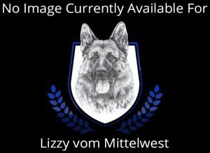 Mittelwest Breeding Female - Lizzy vom Mittelwest