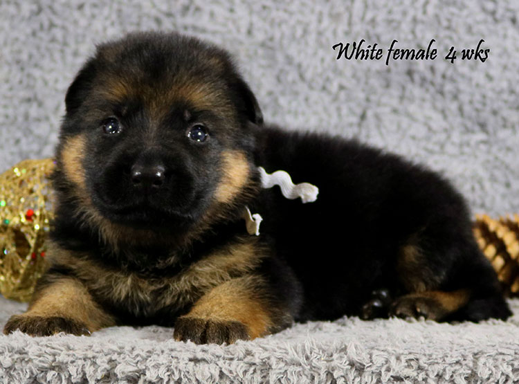 Bindi x Solo - 4 Weeks White Collar Female