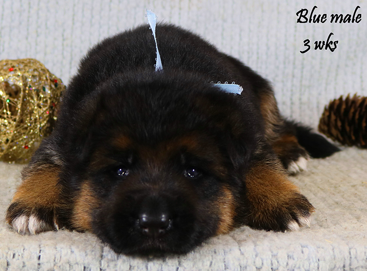 Solo x Lizzy - 3 Weeks Blue Collar Male