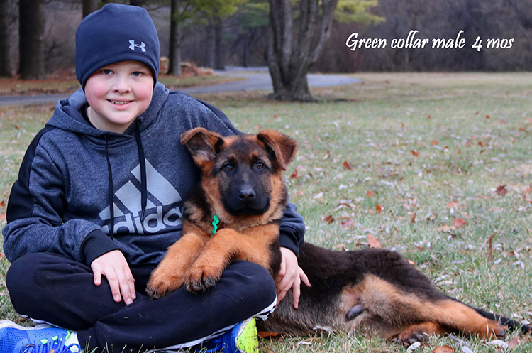 Solo x Philly - 4 Months Green Collar Male 1