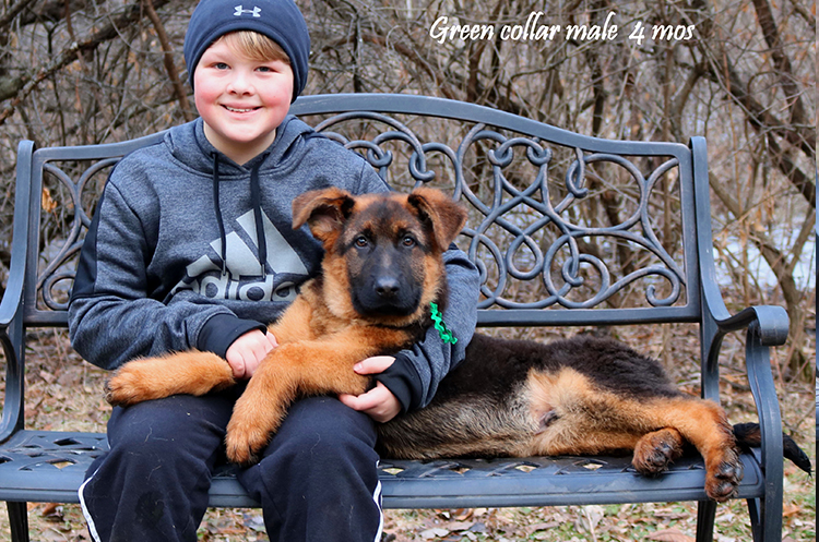 Solo x Philly - 4 Months Green Collar Male 2