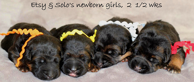 Solo x Etsy - Newborn Girls
