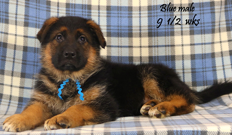 Solo x Lizzy - 9 and Half Week Blue Collar Male