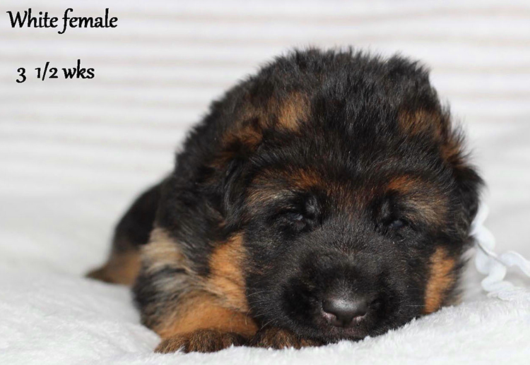 Solo x Etsy - 3 and Half Weeks White Collar Female 1