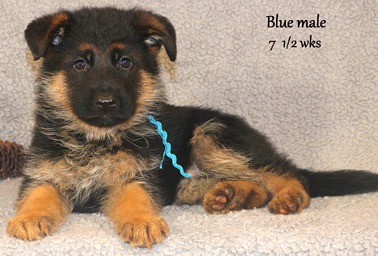 Solo x Vespa - 7 and Half Week Blue Collar Male