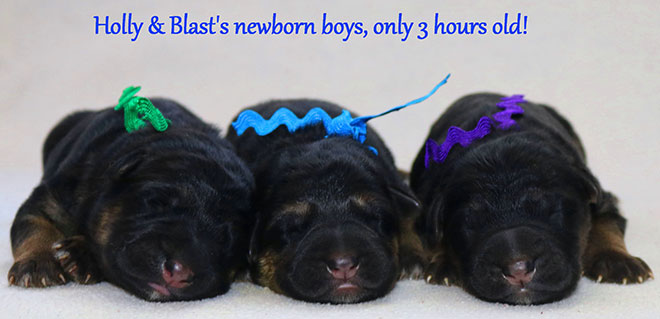 Blast x Holly - Newborn Boys