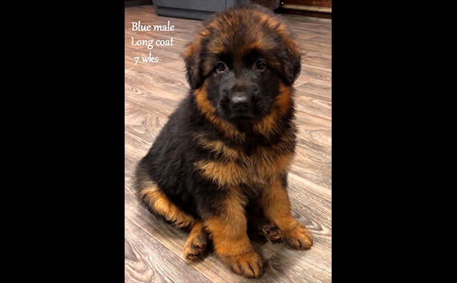 Solo x Etsy - 7 Weeks Blue Collar Male 2
