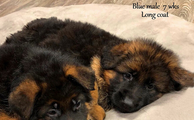 Solo x Etsy - 7 Weeks Blue Collar Male