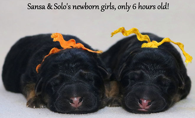 Solo x Sansa - Newborn Girls