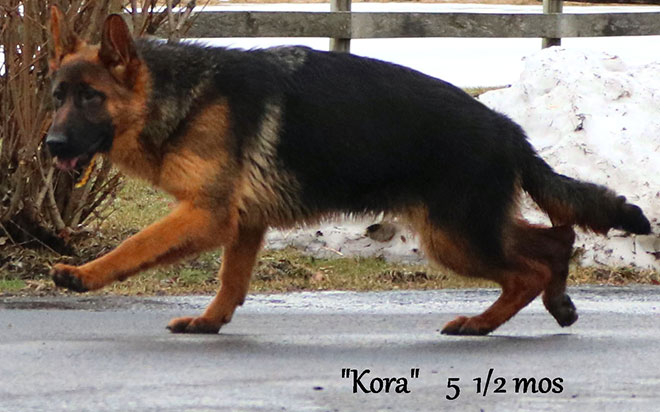 Solo x Vanna - 5 and Half Month Yellow Collar Female 2