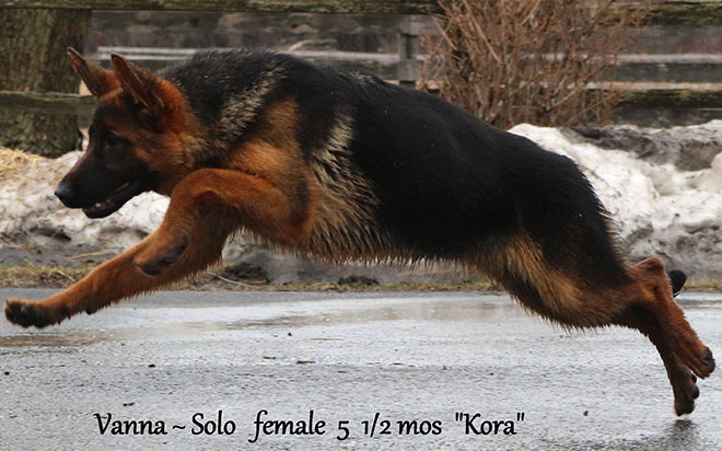 Solo x Vanna - 5 and Half Month Yellow Collar Female 4