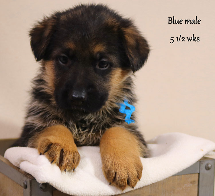 Blast x Holly - 5 and Half Week Blue Collar Male