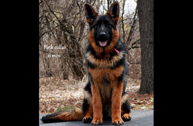 Solo x Anadja - 6 Months Pink Collar Female 3