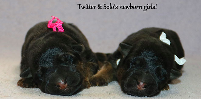Solo x Twitter - Newbornn Girls 2