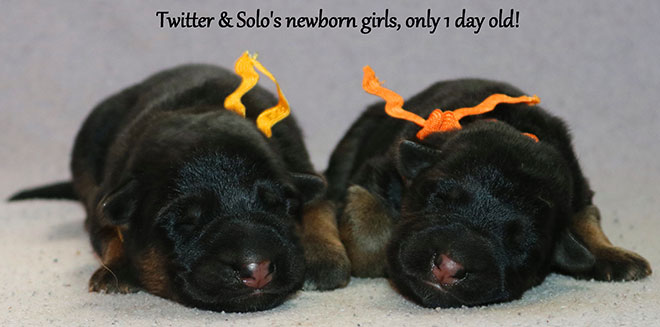 Solo x Twitter - Newbornn Girls