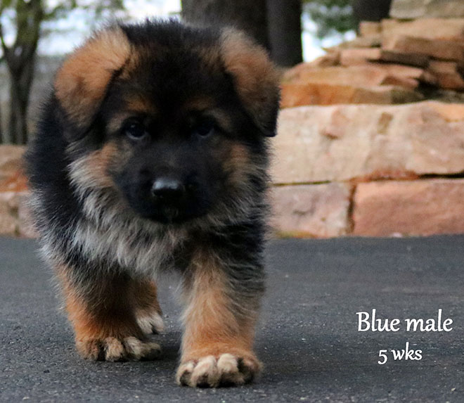 Urex x Melania - 5 Weeks Blue Collar Male