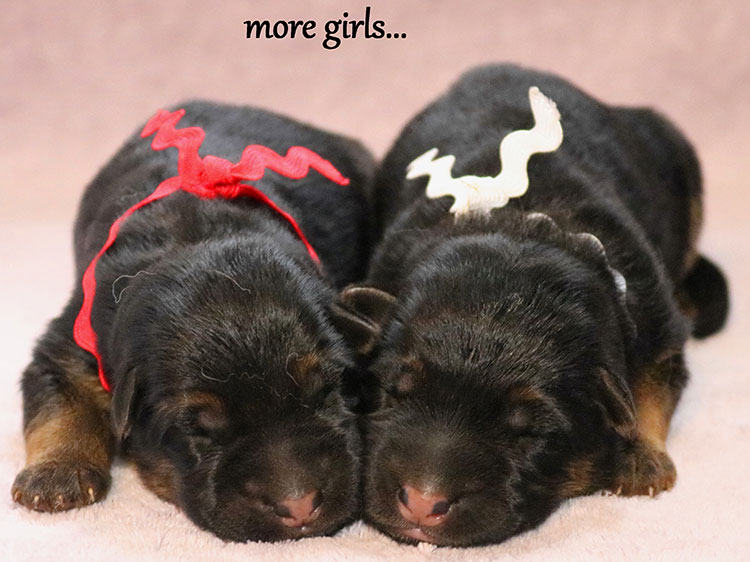 Solo x Xarla - More Newborn Girls