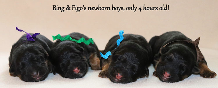 Figo x Bing - Newborn Boys