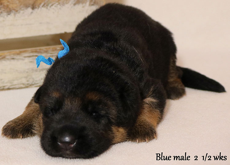 Solo x Flickr - 2 and Half Weeks Blue Collar Male