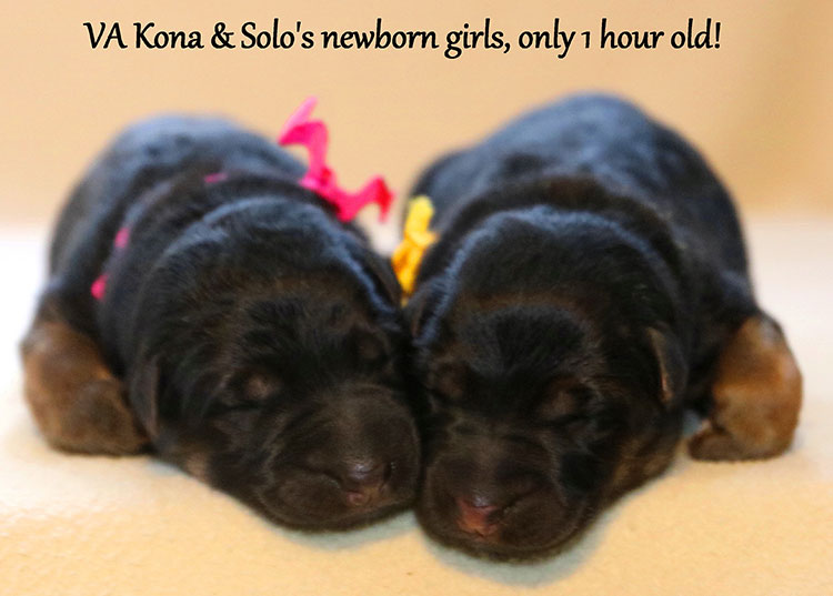 Solo x Kona - Newborn Girls