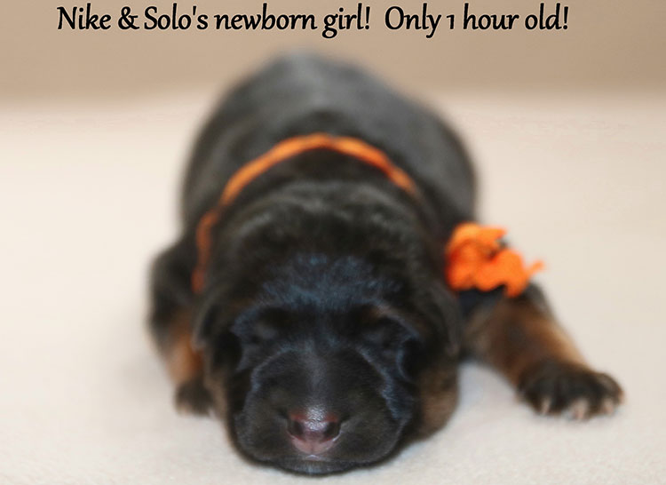 Solo x Nike - Newborn Girls