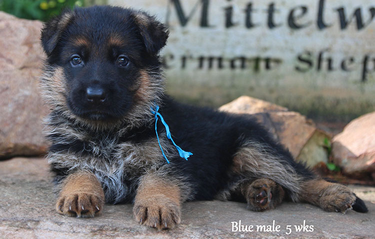 Solo x Flickr - 5 Weeks Blue Collar Male