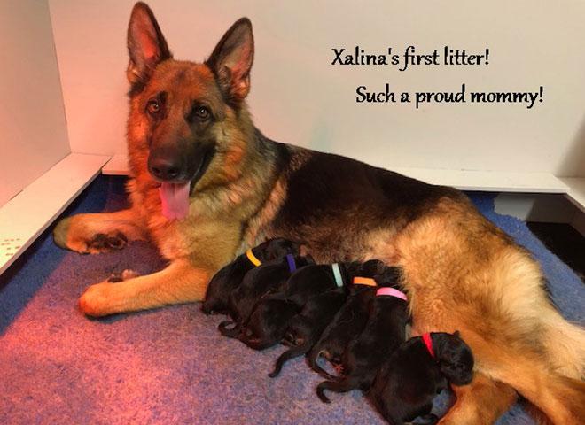 xalina-vom-mittelwest-with-newborn-pups-2