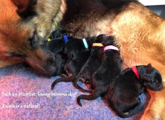 xalina-vom-mittelwest-with-newborn-pups