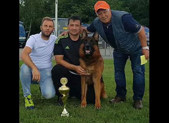 Mittelwest Adult Male German Shepherd For Sale - Adel von Edelweiss