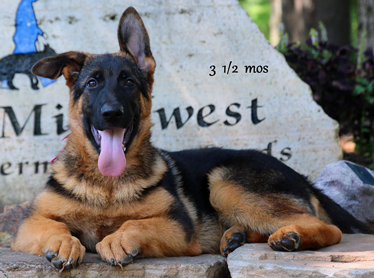 Solo x Twitter - 3 and Half Months Pink Collar Female