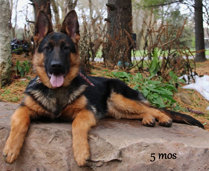 Solo x Flickr - 5 Months Pink Collar Female