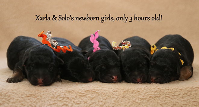 Solo x Xarla - Newborn Girls