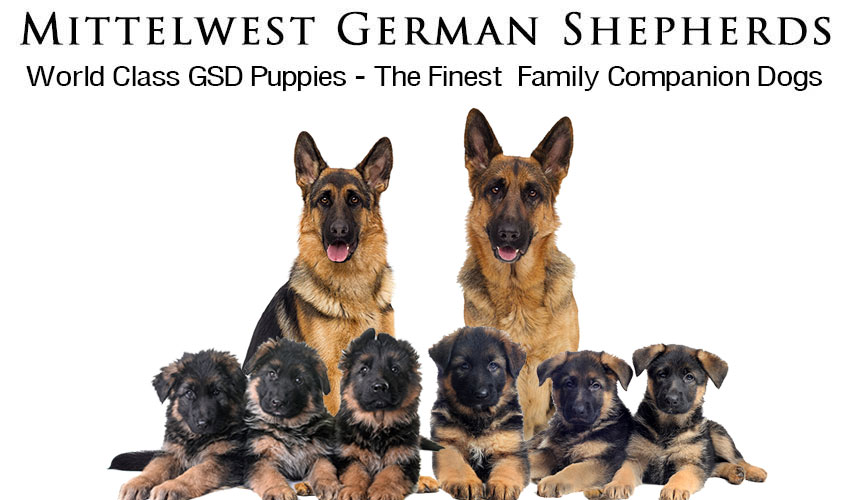 Mittelwest German Shepherd Puppies For Sale