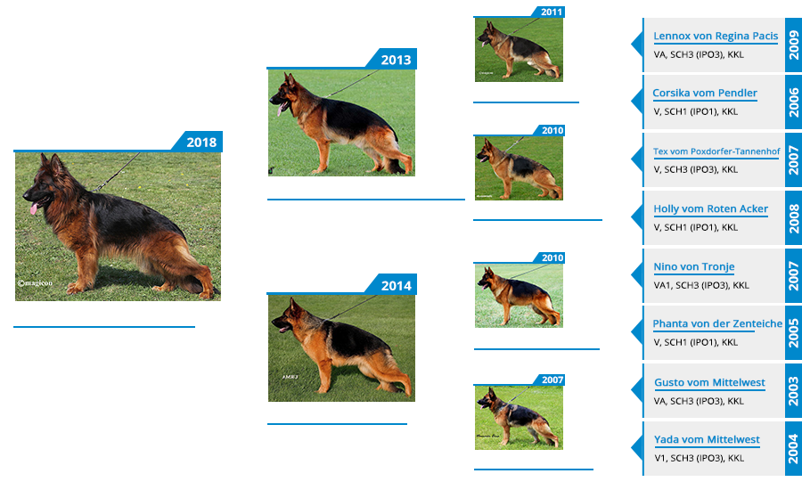 Mittelwest's Breeding Females - V Darling vom Mittelwest Pedigree